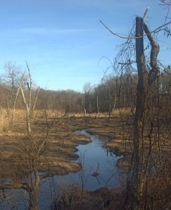 Wetlands final 1