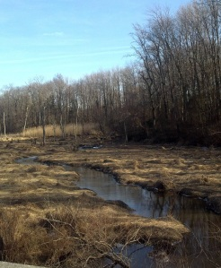 Wetlands final 2