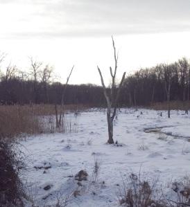 wetlands in winter 2
