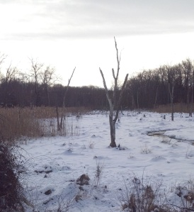 wetlands in winter 2