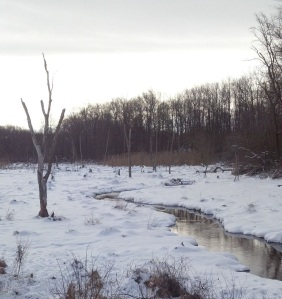 wetlands in winter