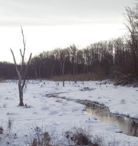 wetlands in winter