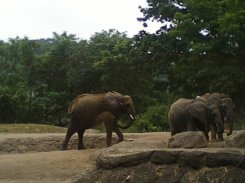elephants at Philly Zoo