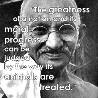 Ghandi animal quote