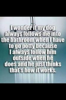 dog bathroom