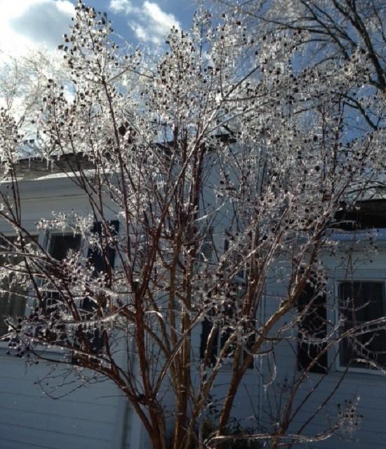 Ice tree with berries 3
