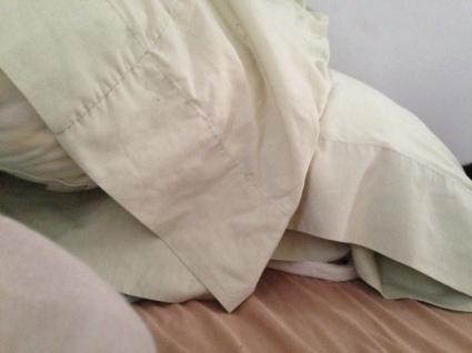 Petra in pillow