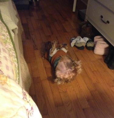 Rufus sleeping