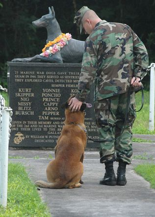 memorial day dog