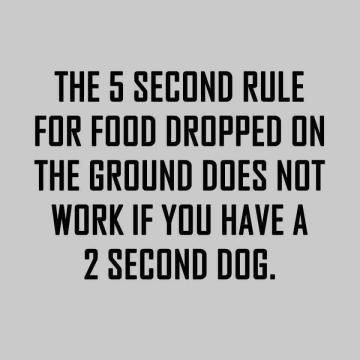 2 second dog