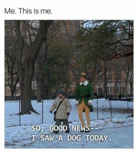elf-and-dog