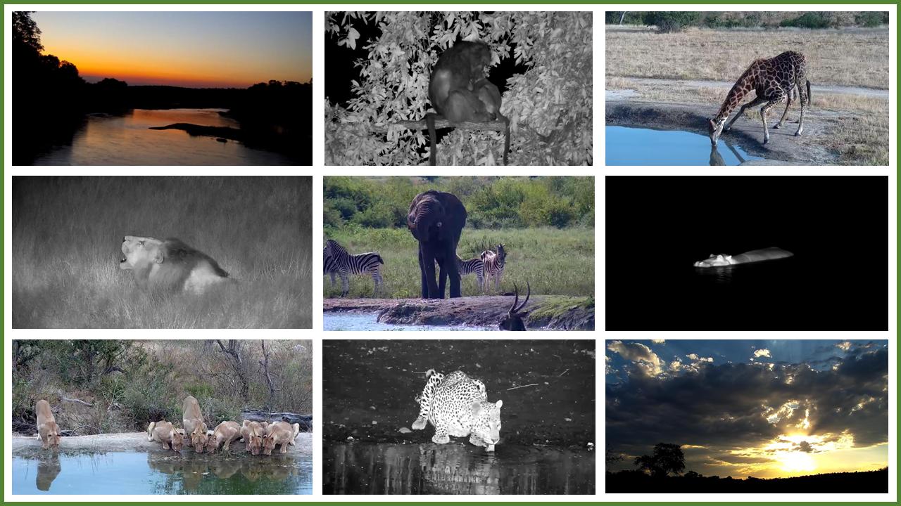 africam photos slide